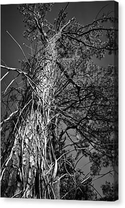 Canvas Print featuring the photograph Reaching To The Sky by Greg Jackson