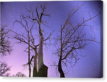 Reaching To The Stars Canvas Print by James BO  Insogna