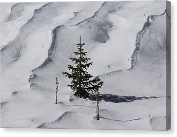 Ready For Christmas Canvas Print by Ernie Echols