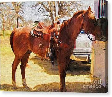 Ready For Some Ropin Canvas Print by Shannon Story
