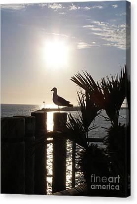 Canvas Print featuring the photograph Ready For Sunset by Bev Conover