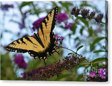 Canvas Print featuring the photograph Ready For Take Off by Judy Wolinsky