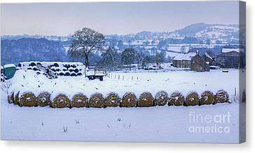 Ready For Winter Canvas Print by David Birchall