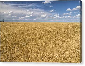 Canvas Print featuring the photograph Ready To Harvest by Rob Graham