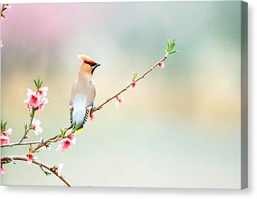 Rear View Of Bird Perching On Branch Canvas Print by Panoramic Images