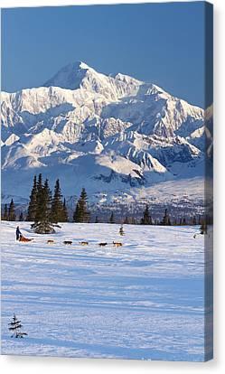 Recreational Dog Mushing In Denali Canvas Print by Jeff Schultz