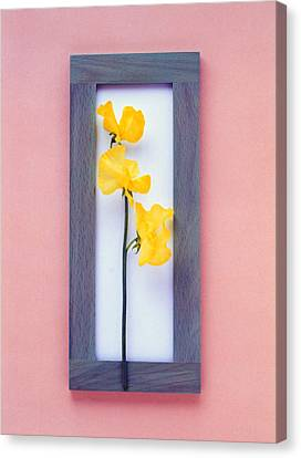 Rectangular Purple Frame With Yellow Canvas Print by Panoramic Images