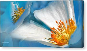 Recuerdos De La Primavera Canvas Print