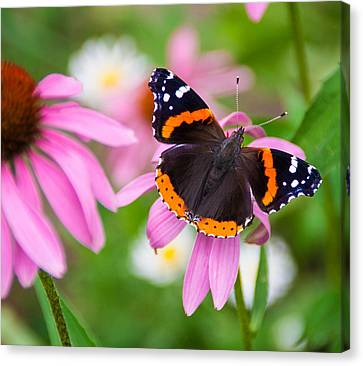 Canvas Print featuring the photograph Red Admiral Butterfly by Patti Deters