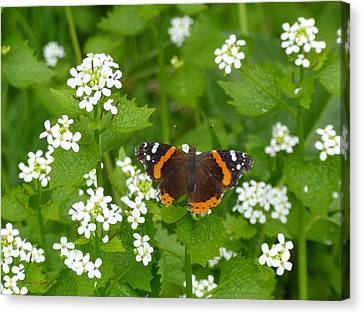 Canvas Print featuring the photograph Red Admirals by Lingfai Leung