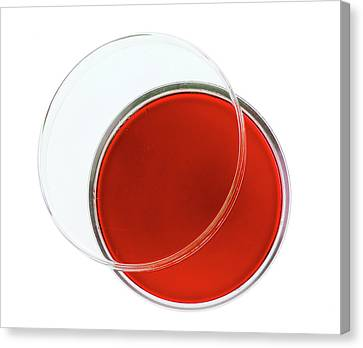 Laboratory Equipment Canvas Print - Red Agar Plate by Natural History Museum, London