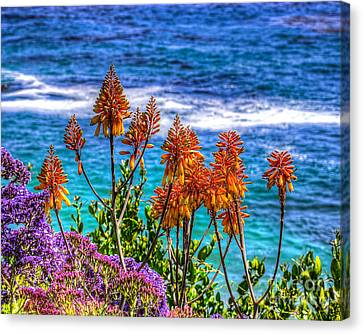 Canvas Print featuring the photograph Red Aloe By The Pacific by Jim Carrell