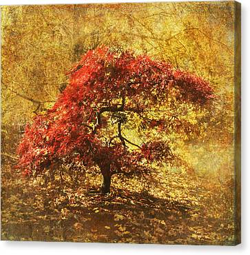 Red And Gold Canvas Print by Angie Vogel