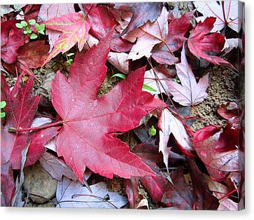 Red And Green Of Fall Canvas Print