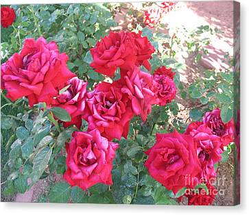 Canvas Print featuring the photograph Red And Pink Roses by Chrisann Ellis