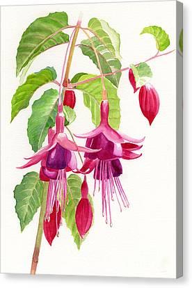 Red And Purple Fuchsias Canvas Print by Sharon Freeman