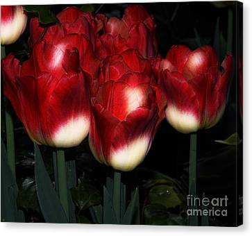 Red And White Tulips Canvas Print by Kathleen Struckle