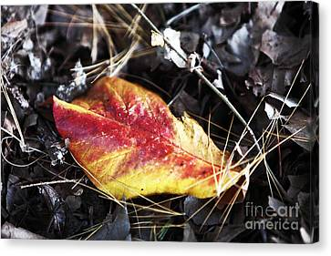 Red And Yellow Canvas Print by John Rizzuto