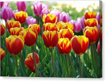 Canvas Print featuring the photograph Red And Yellow Tulips  by Allen Beatty