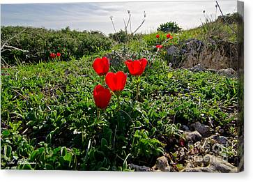 Red Anemone Canvas Print by Arik Baltinester