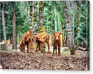 Canvas Print featuring the pyrography Red Angus Calves by Larry Campbell