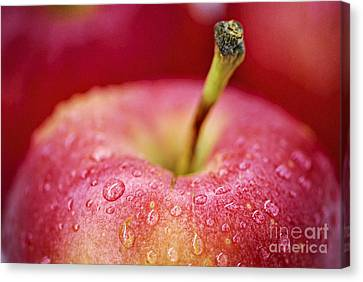 Red Apple Canvas Print by Elena Elisseeva