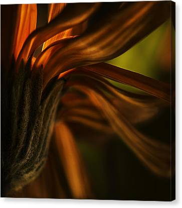 Canvas Print featuring the photograph Red Autumn Blossom Detail by Peter v Quenter