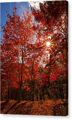 Canvas Print featuring the photograph Red Autumn Leaves by Jerry Cowart