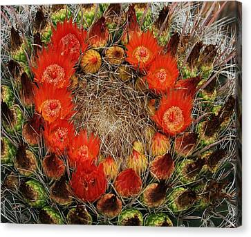 Canvas Print featuring the photograph Red Barell Cactus Flowers by Tom Janca