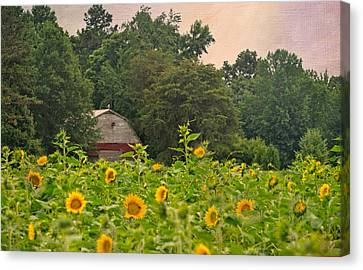 Red Barn Among The Sunflowers Canvas Print by Sandi OReilly