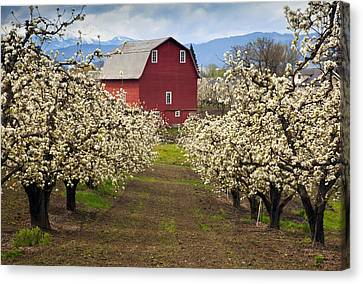 Red Barn Spring Canvas Print by Mike  Dawson