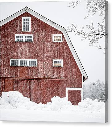 Red Barn Whiteout Canvas Print