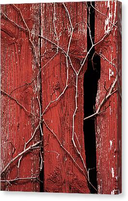 Canvas Print featuring the photograph Red Barn Wood With Dried Vines by Rebecca Sherman