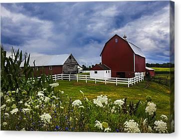 Red Barns Under Blue Skies Canvas Print by Debra and Dave Vanderlaan