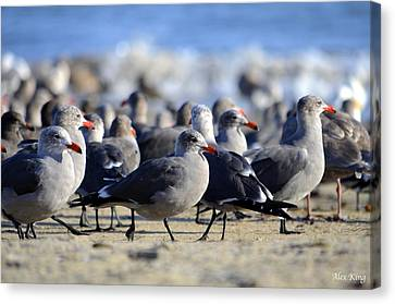Canvas Print featuring the photograph Red Beak Seagull Convention by Alex King
