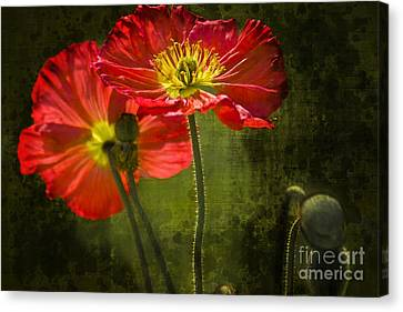 Red Beauties In The Field Canvas Print by Heiko Koehrer-Wagner