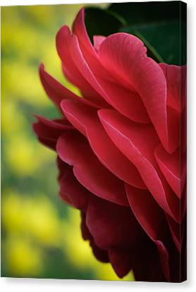 Red Beauty Canvas Print by James Barber