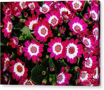 Red Bed Of Flowers 5d22462 Canvas Print by Wingsdomain Art and Photography
