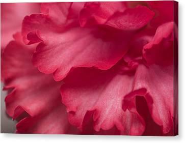 Red Begonia Petals Canvas Print by Priya Ghose