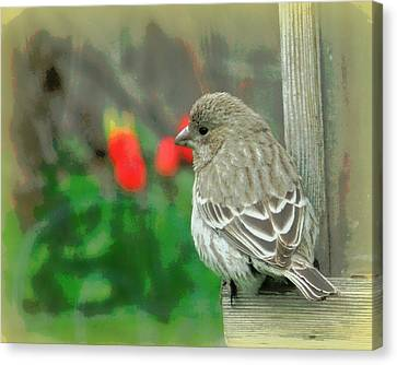 Red Behind Little Beak Canvas Print