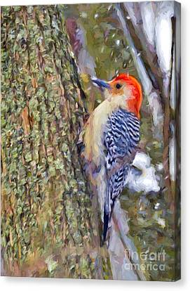 Red-bellied Woodpecker As The Snow Falls Canvas Print