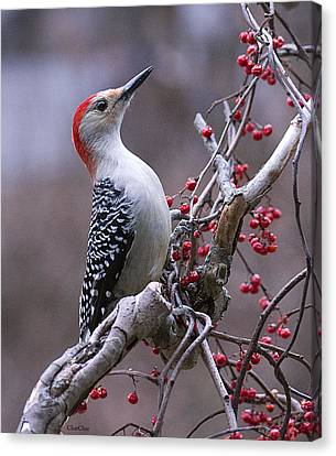 Red Bellied Woodpecker Canvas Print by Charlene Palmer