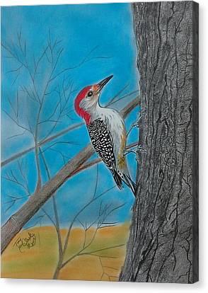Red Bellied Woodpecker Canvas Print by Tony Clark