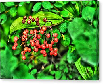 Red Berries Canvas Print by Don Mann