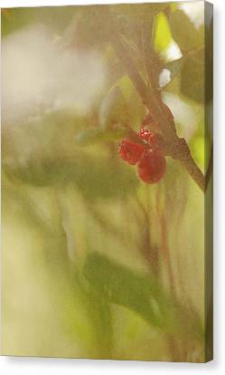 Red Berries Of The Bog Cranberry Canvas Print by Roberta Murray