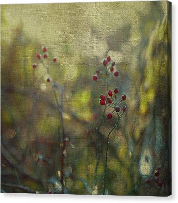Red Berries On Green After Frost Canvas Print by Brooke T Ryan