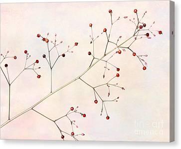 Florida Flowers Canvas Print - Red Berries by Sabrina L Ryan