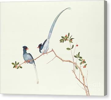Red Billed Blue Magpies On A Branch With Red Berries Canvas Print by Chinese School