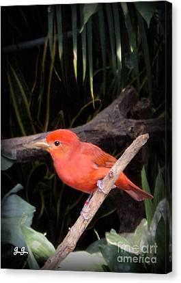 Red Bird Pose Canvas Print