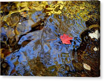 Red Blue And Gold Canvas Print by Frozen in Time Fine Art Photography